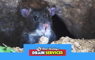 rat blocker for drains blackpool
